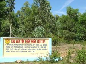 Đà Nẵng: Gần 10.400 chữ ký bảo vệ thiên nhiên Sơn Trà