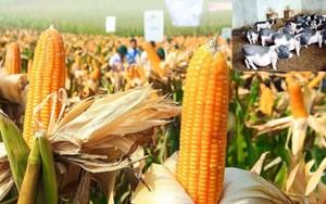 Nguồn gen cây trồng, vật nuôi bản địa có nguy cơ suy giảm