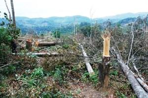 Đắk Glong (Đắk Nông) phê bình Hạt trưởng Hạt Kiểm lâm và Chủ tịch xã để mất rừng