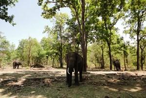 Đắk Lắk: Sẽ có 18 con voi được huy động để tham gia Lễ hội năm 2016