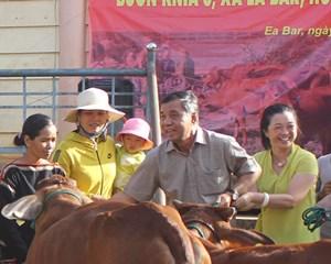 Đắk Lắk: Tặng bò sinh sản cho hộ nghèo