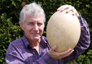 Đấu giá quả trứng lớn nhất thế giới