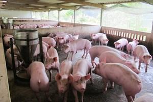 Đầu ra cho nông sản: Phải giải được bài toán cung vượt cầu