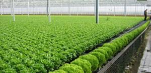 Đầu tư vào nông nghiệp: Rào cản cần tháo gỡ