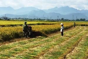 Điện Biên: Tái cơ cấu ngành nông nghiệp gắn với xây dựng nông thôn mới