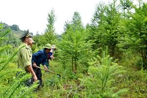 Điều chỉnh, bổ sung, xây dựng Luật Bảo vệ và phát triển rừng