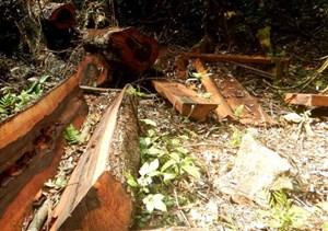Điều tra, làm rõ vụ phá rừng ở Di sản Phong Nha - Kẻ Bàng