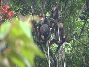 Động Châu - khe Nước Trong: Cần sớm thành lập  Khu bảo tồn thiên nhiên