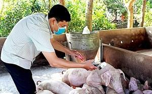 Dịch tả lợn châu Phi đã xuất hiện tại 59 tỉnh, thành phố