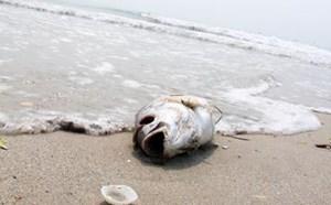 Formosa Hà Tĩnh khắc phục lỗi vi phạm về môi trường