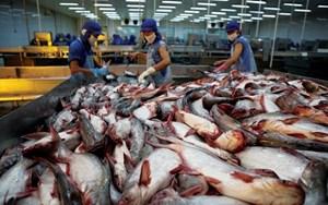 Giá tôm và cá tra trong nước tăng cao