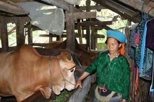 Hà Giang: Giảm trên 22.500 hộ nghèo