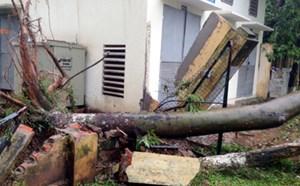 Hà Nội: 1 người chết, 5 người bị thương trong bão số 1