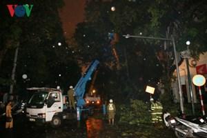 Hà Nội: Cây đổ sau cơn mưa giải nhiệt làm 1 người nhập viện