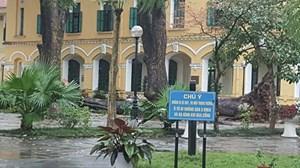 Hà Nội: Cây đổ trong sân trường, 4 học sinh bị thương
