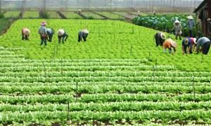 Hà Nội : Sản xuất nông nghiệp tăng 6,6%