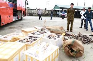 Hà Tĩnh: Bắt xe khách chở hơn 1 tấn sản phẩm động vật đã bốc mùi hôi thối
