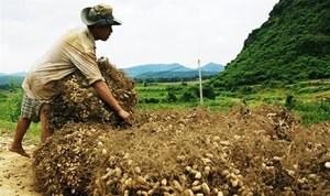 Hà Tĩnh: Một hợp tác xã bán 7 tấn lạc giống không rõ nguồn gốc