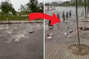Hàng trăm con cá nhảy lên bờ 'tự sát'