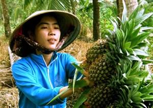Hậu Giang: Ưu tiên đầu tư cho lĩnh vực nông nghiệp