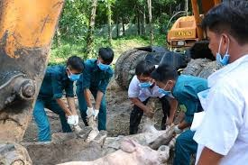 TP Hồ Chí Minh: Phát hiện thêm 2 ổ dịch tả lợn châu Phi
