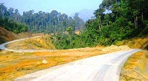 Hỗ trợ gạo cho đồng bào dân tộc thiểu số, hộ nghèo tự nguyện trồng rừng