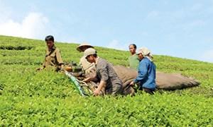 Hỗ trợ phát triển sản xuất để giảm nghèo bền vững
