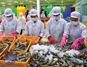 Hoa Kỳ thay đổi cách tính thuế đối với tôm nhập khẩu từ Việt Nam