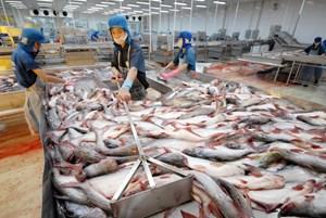 Hoa Kỳ tiếp tục là thị trường dẫn đầu xuất khẩu cá tra