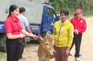 Hội Chữ thập đỏ bàn giao bò tại xã Công Bằng, huyện Pác Nặm