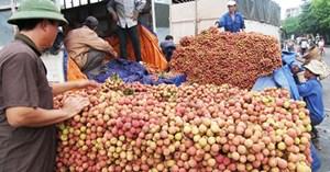 Hơn 5.000 tấn vải thiều xuất qua cửa khẩu Lào Cai