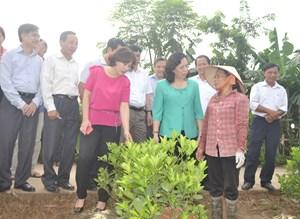Hướng tới Đại hội MTTQ Việt Nam các cấp, nhiệm kỳ 2019-2024: Xây dựng nông thôn mới theo hướng bền vững