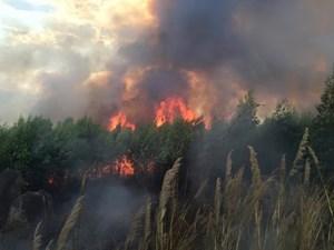 Huy động gần 300 người chữa cháy rừng