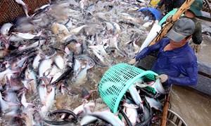 Kêu gọi Hoa Kỳ sớm dỡ bỏ hoàn toàn chương trình giám sát cá da trơn