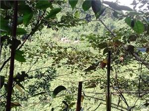 Khẩn trương bảo vệ đàn voi 7 con xuất hiện ở xã Quế Lâm