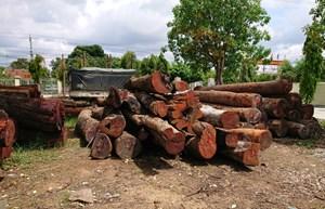 Khởi tố hạt trưởng kiểm lâm nhận tiền, gỗ của Phượng 'râu'