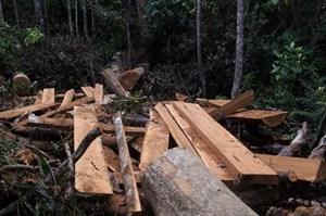 Khởi tố vụ phá rừng ở Vĩnh Thạnh, Bình Định