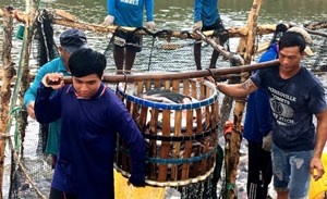 Kỳ vọng kỷ lục mới từ cá tra