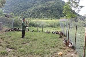 Lai Châu: Tìm hướng thoát nghèo cho bà con