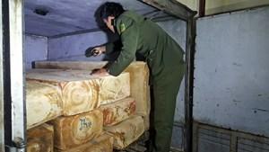 Lâm Đồng: Bắt giữ vụ vận chuyển trái phép gỗ pơ mu