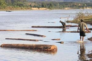 Lâm Đồng: Phát hiện lượng lớn gỗ sao đen không rõ nguồn gốc