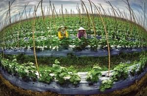 Làm nông nghiệp công nghệ cao: Trọng tâm phải là  thị trường