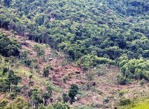 Làm rõ thông tin phản ánh chặt rừng phòng hộ ở Vĩnh Phúc