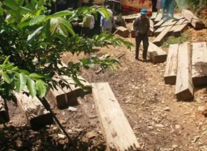 Lâm tặc lại tấn công bảo vệ rừng