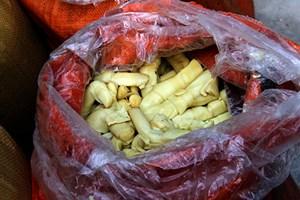 Lào Cai: Bắt 10 tấn măng tre ngâm hóa chất Trung Quốc