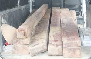 Lào Cai: Bắt đối tượng vận chuyển gỗ lậu