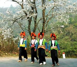 Lễ hội hoa ban tại Hà Nội