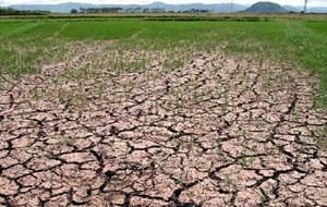 Phú Yên: Hơn 4.000 ha lúa hè thu bị khô hạn