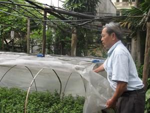 Mảnh vườn cuối cùng của  làng hoa Ngọc Hà