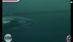 Michael Phelps thua cá mập 2 giây khi bơi thi 100m